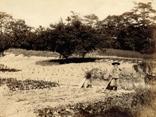 明治・大正期 敷地内にあった畑の画像